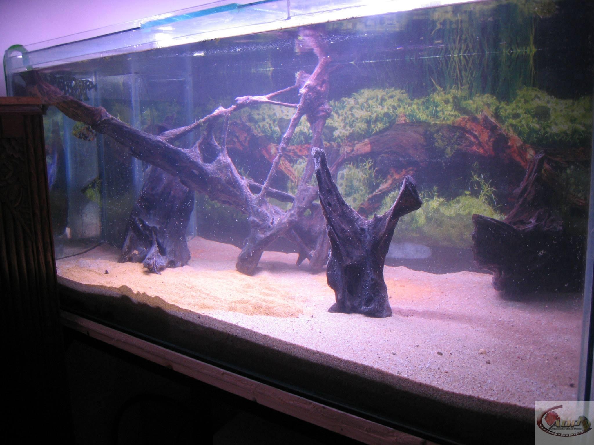Aquarium de 800 Litres préparé pour accueillir des discus