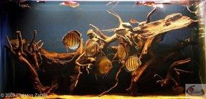 Aquarium biotope discus par Christos Zaralis - concours AGA 2009