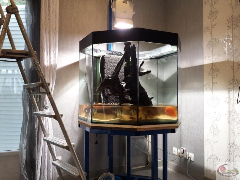 Aquarium de 700L éclairé par spot HQI 150W