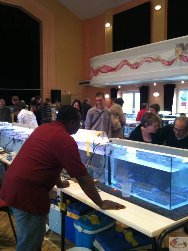 Bourse aquariophile de Montdidier - 11 octobre 2009