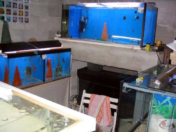 Fishroom d'Alexandre alias Blue
