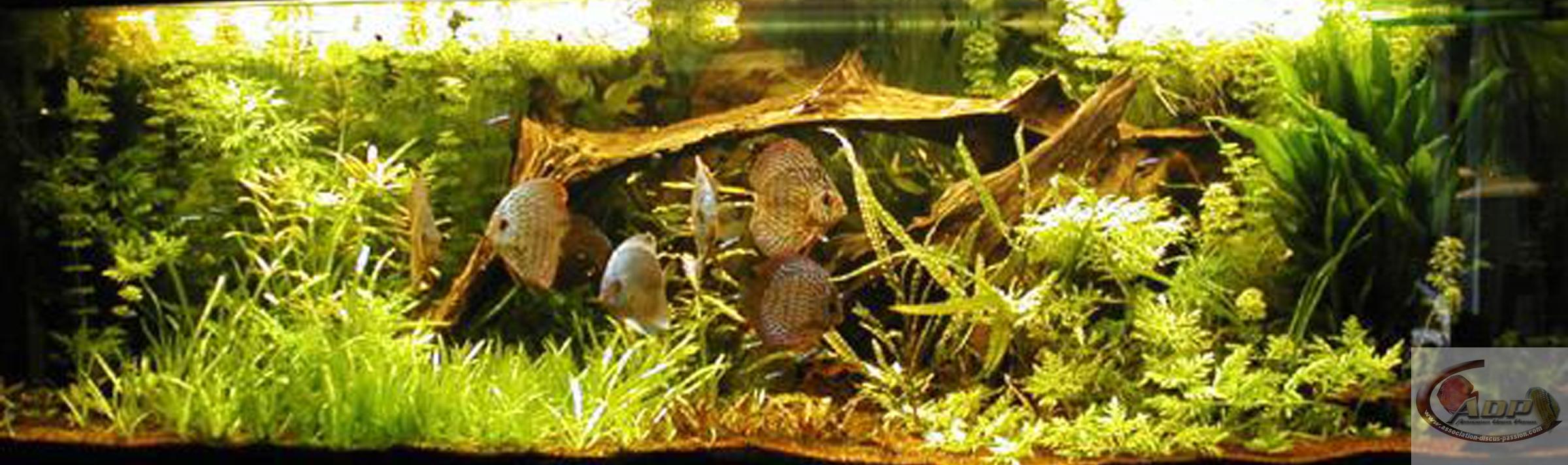 L'aquarium de Virginie