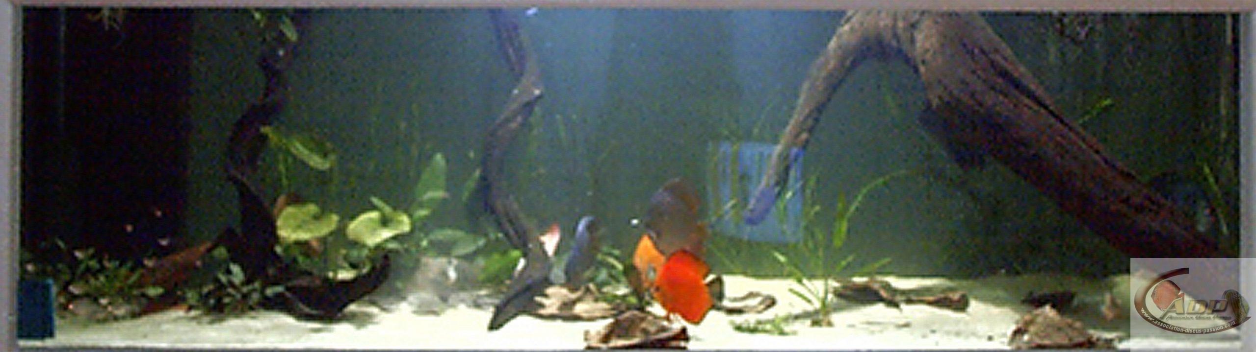 L'aquarium de John