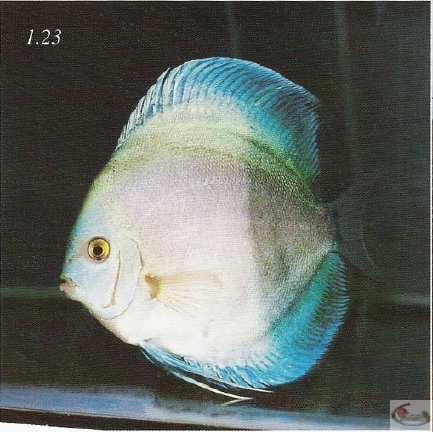 La photo 1.23 montre le côté gauche d'un poisson avecune large tache noire