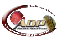 Association Discus Passion