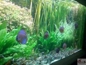 Aquarium Biotope Amazonien de l'aquarium de la Porte Dorée