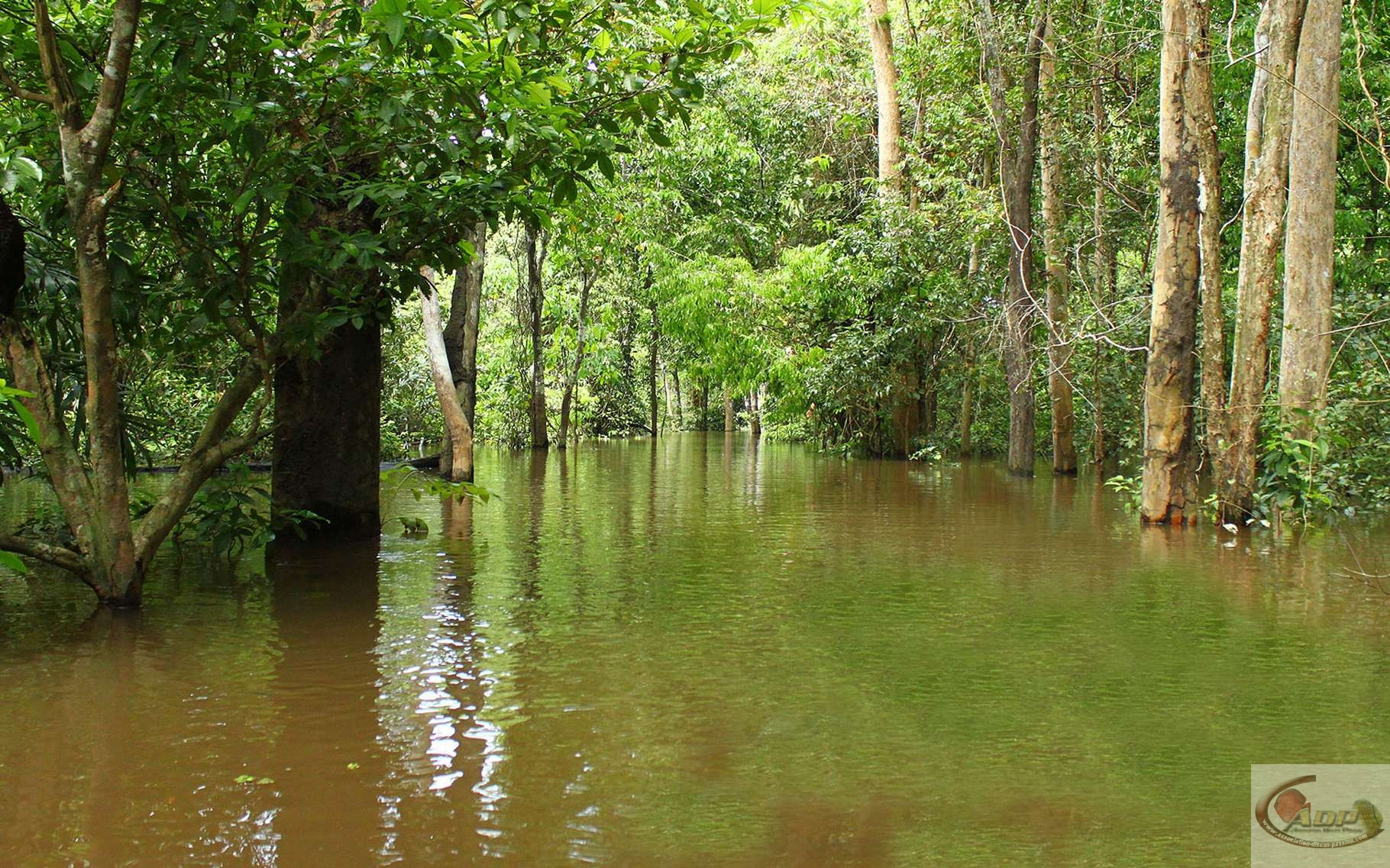 Parc National de Jaú - Amazonie. © Artur Warchavchik, Wikimedia commons, CC by-sa 3.0