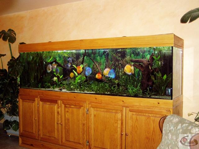 Aquarium de Michel