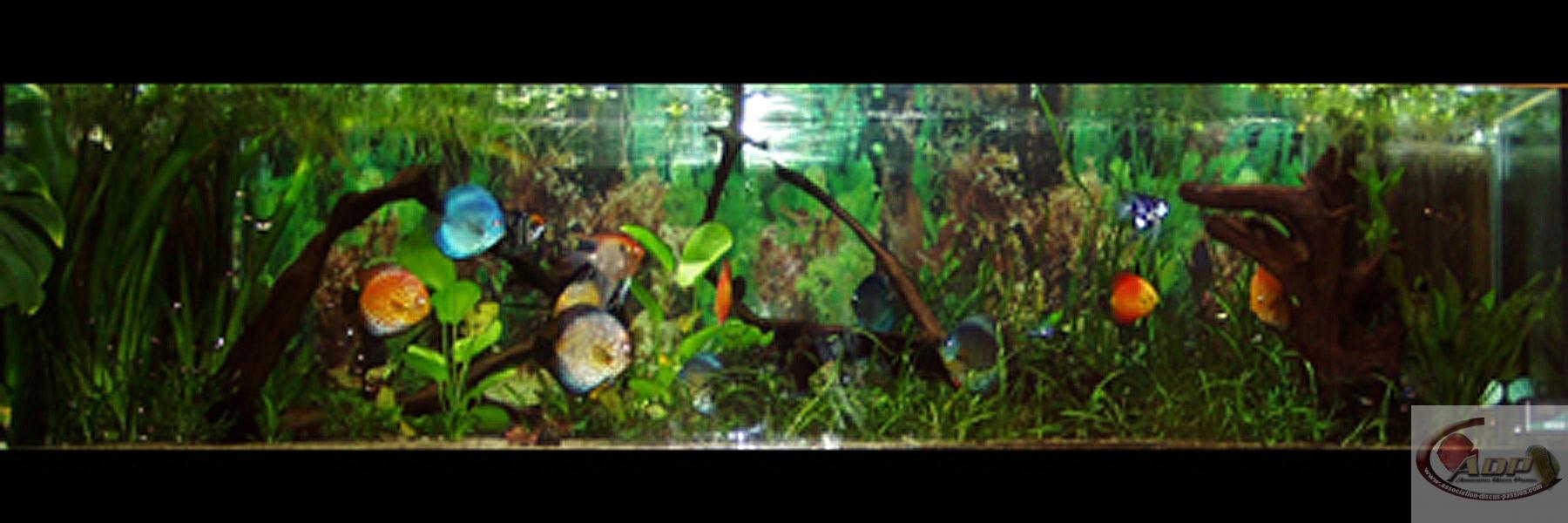 L'aquarium de Michel